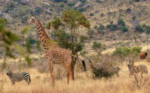 À la découverte des sites de safari intimistes au Kenya